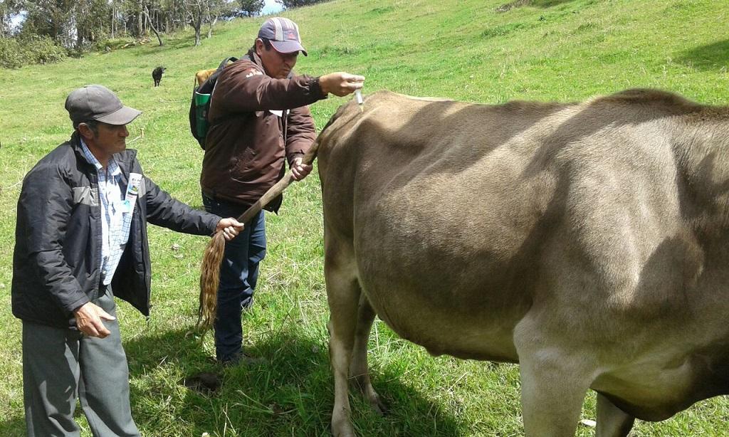 Piura: en III Congreso Regional de Ganadería Bovina destacan importancia de este tipo de ganado - El Regional